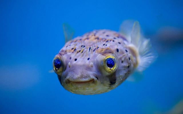 La storia dei pesciolini: mindfulness e attenzione