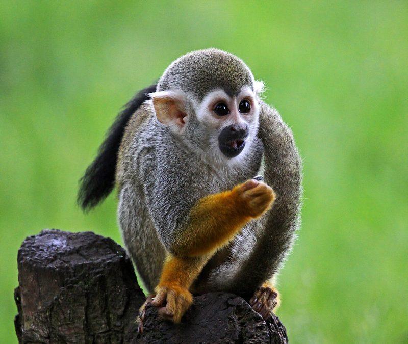 Momenti di mindfulness in famiglia: la storia della scimmia e la pece